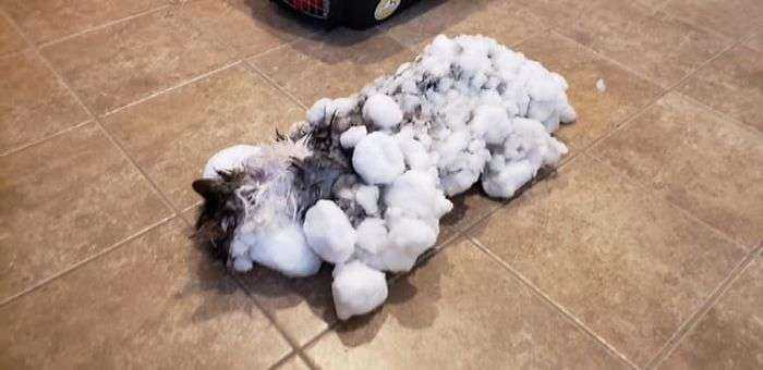 1549637288 594 este gato congelado en la nieve se recupera milagrosamente despues de que los veterinarios lucharan por su vida durante horas - Este gato congelado en la nieve se recupera milagrosamente después de que los veterinarios lucharan por su vida durante horas