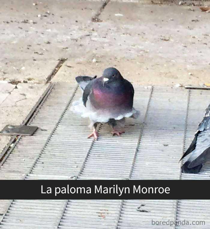 1557753638 376 20 pajaros tan divertidos que tenian que estar en snapchat - 20 Pájaros tan divertidos que tenían que estar en Snapchat