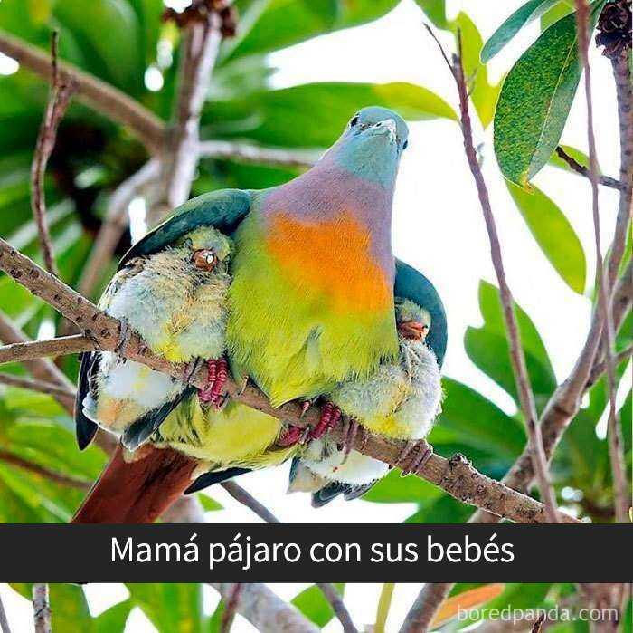 1557753638 474 20 pajaros tan divertidos que tenian que estar en snapchat - 20 Pájaros tan divertidos que tenían que estar en Snapchat