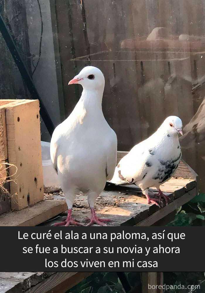 1557753638 631 20 pajaros tan divertidos que tenian que estar en snapchat - 20 Pájaros tan divertidos que tenían que estar en Snapchat