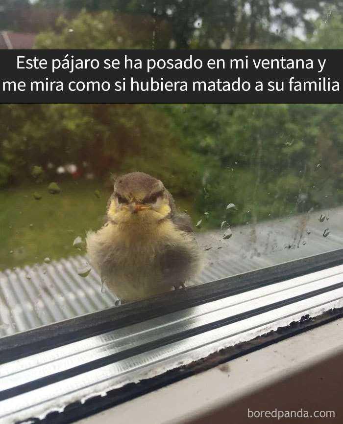 1557753638 81 20 pajaros tan divertidos que tenian que estar en snapchat - 20 Pájaros tan divertidos que tenían que estar en Snapchat