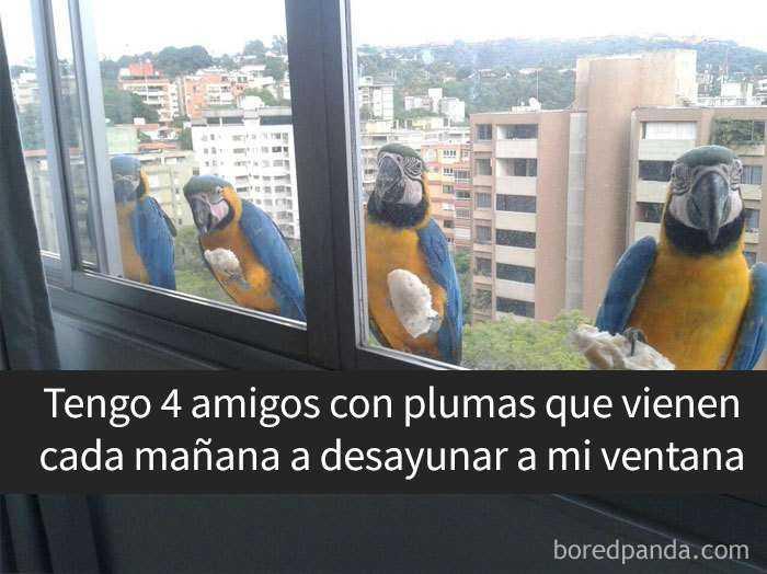 1557753639 956 20 pajaros tan divertidos que tenian que estar en snapchat - 20 Pájaros tan divertidos que tenían que estar en Snapchat