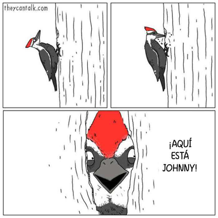 1557760905 332 muestro lo que dirian los pajaros si pudieran hablar 20 imagenes - Muestro lo que dirían los pájaros si pudieran hablar (20 imágenes)