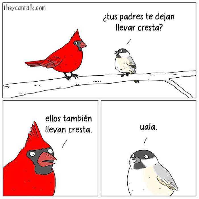 1557760906 90 muestro lo que dirian los pajaros si pudieran hablar 20 imagenes - Muestro lo que dirían los pájaros si pudieran hablar (20 imágenes)