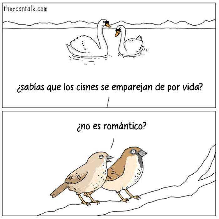 1557760906 988 muestro lo que dirian los pajaros si pudieran hablar 20 imagenes - Muestro lo que dirían los pájaros si pudieran hablar (20 imágenes)