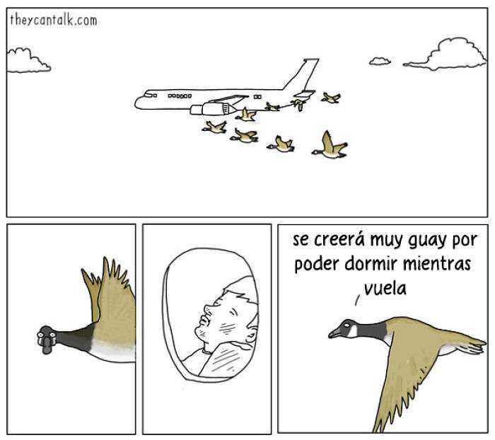 1557760907 430 muestro lo que dirian los pajaros si pudieran hablar 20 imagenes - Muestro lo que dirían los pájaros si pudieran hablar (20 imágenes)
