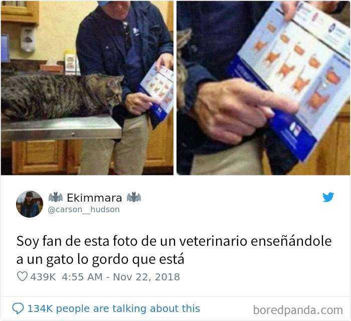 1561130644 516 20 divertidos tuits sobre gatos - 20 Divertidos tuits sobre gatos