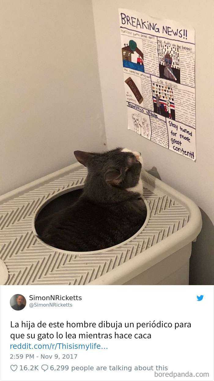 1561130644 839 20 divertidos tuits sobre gatos - 20 Divertidos tuits sobre gatos
