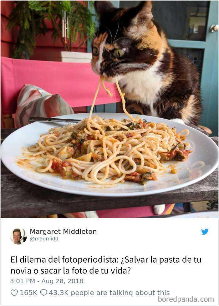 1561130645 570 20 divertidos tuits sobre gatos - 20 Divertidos tuits sobre gatos