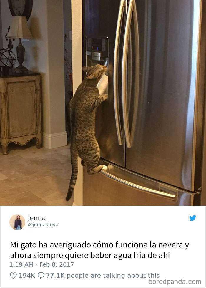 1561130645 698 20 divertidos tuits sobre gatos - 20 Divertidos tuits sobre gatos