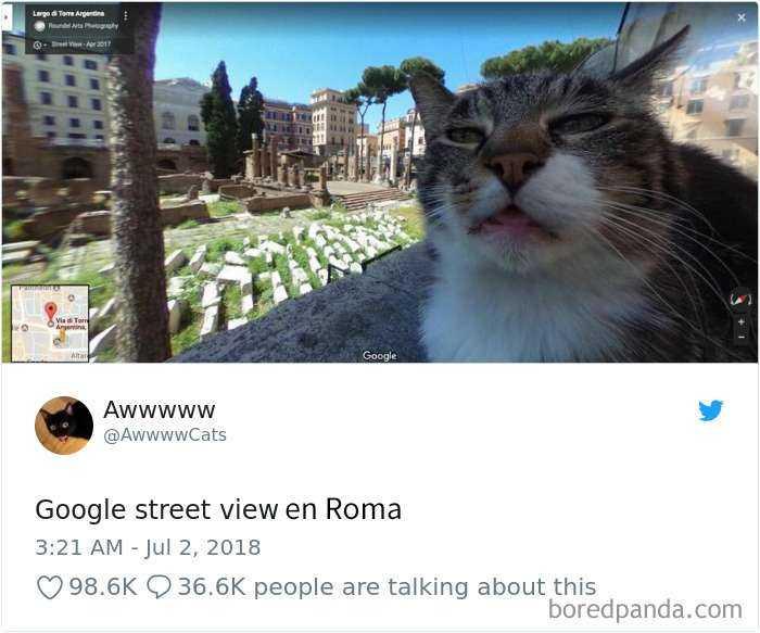 1561130645 734 20 divertidos tuits sobre gatos - 20 Divertidos tuits sobre gatos