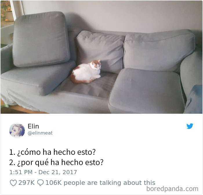 1561130646 352 20 divertidos tuits sobre gatos - 20 Divertidos tuits sobre gatos
