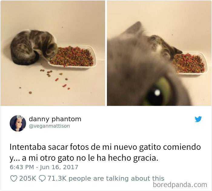 1561130646 395 20 divertidos tuits sobre gatos - 20 Divertidos tuits sobre gatos