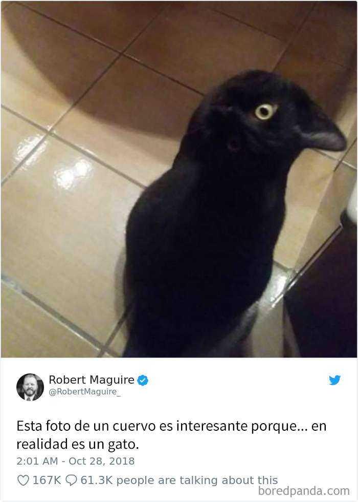 1561130646 551 20 divertidos tuits sobre gatos - 20 Divertidos tuits sobre gatos