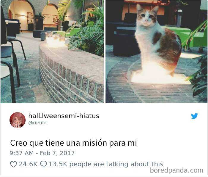 1561130646 635 20 divertidos tuits sobre gatos - 20 Divertidos tuits sobre gatos