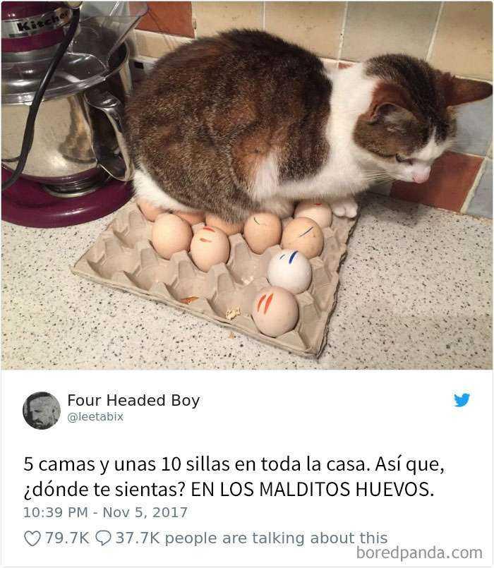 1561130646 907 20 divertidos tuits sobre gatos - 20 Divertidos tuits sobre gatos