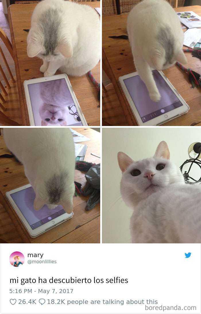 1561130647 318 20 divertidos tuits sobre gatos - 20 Divertidos tuits sobre gatos
