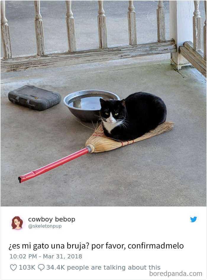 1561130647 841 20 divertidos tuits sobre gatos - 20 Divertidos tuits sobre gatos