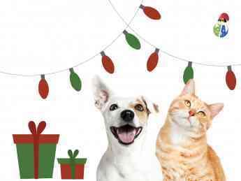 518 la navidad en mascota planet - La Navidad en Mascota Planet
