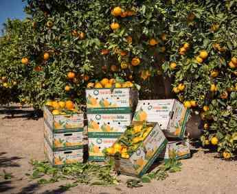 758 naranjaslola com comienza su nueva campana de citricos con importantes novedades - NaranjasLola.com comienza su nueva campaña de cítricos con importantes novedades