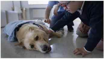 974 montegatto y el chuac pioneros en el estudio de la deteccion de la diabetes con perros - Montegatto y el CHUAC, pioneros en el estudio de la detección de la diabetes con perros